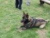 brigada_16-04-2011_37