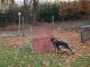 trenink_listopad_2012_081