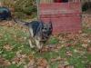 trenink_listopad_2012_087
