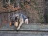 trenink_listopad_2012_096