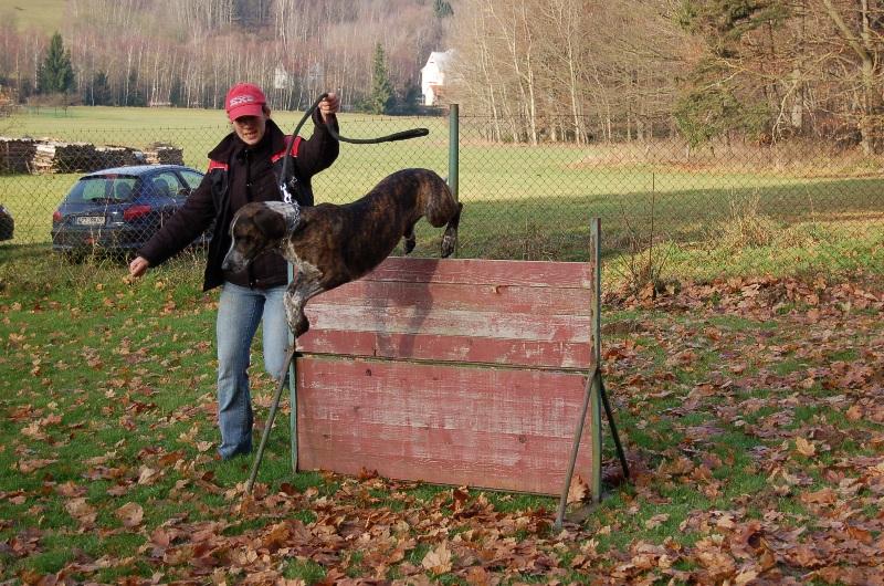 trenink_listopad_2012_136