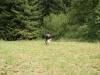 ukazky-zelenov-2012-28